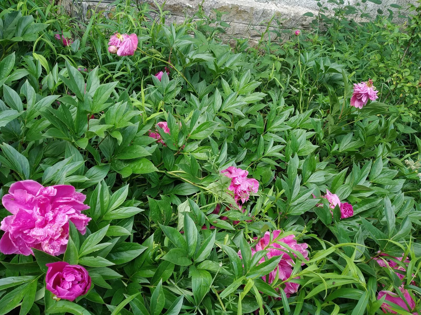 Babkina záhrada - Pri starom dome, babkinom rodičovskom;-)