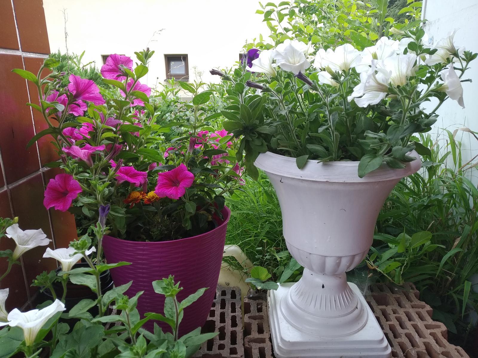 Babkina záhrada - Moje potešenie pre jej radosť:-)