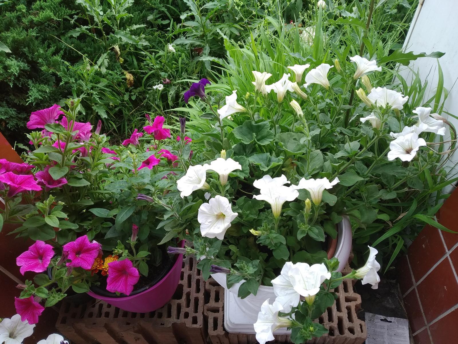 Babkina záhrada - Samé kvety