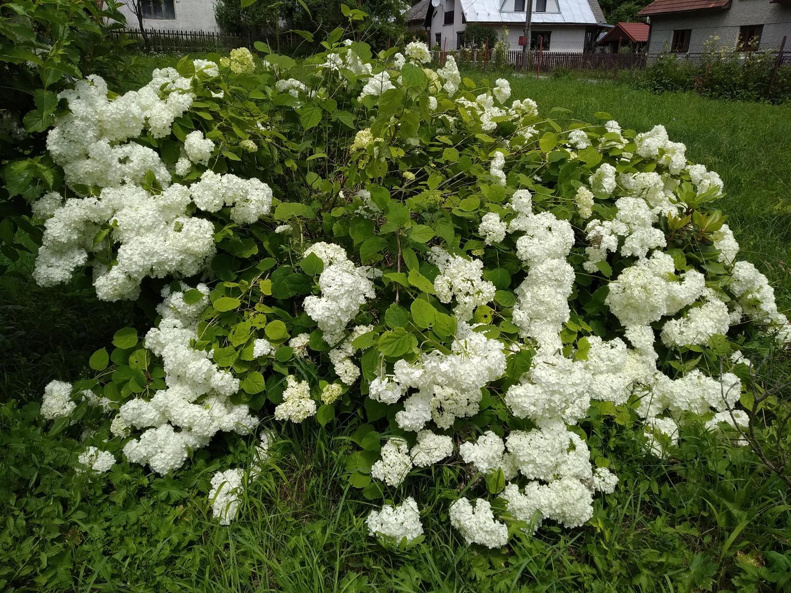 Babkina záhrada - Obrázok č. 91