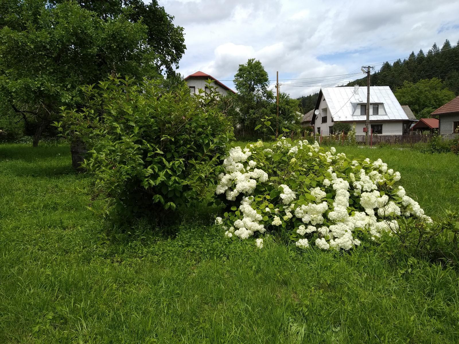 Babkina záhrada - Obrázok č. 92