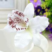 Biela orchidea do vlasov ,