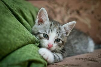 Nás nový člen domácnosti - TYGI