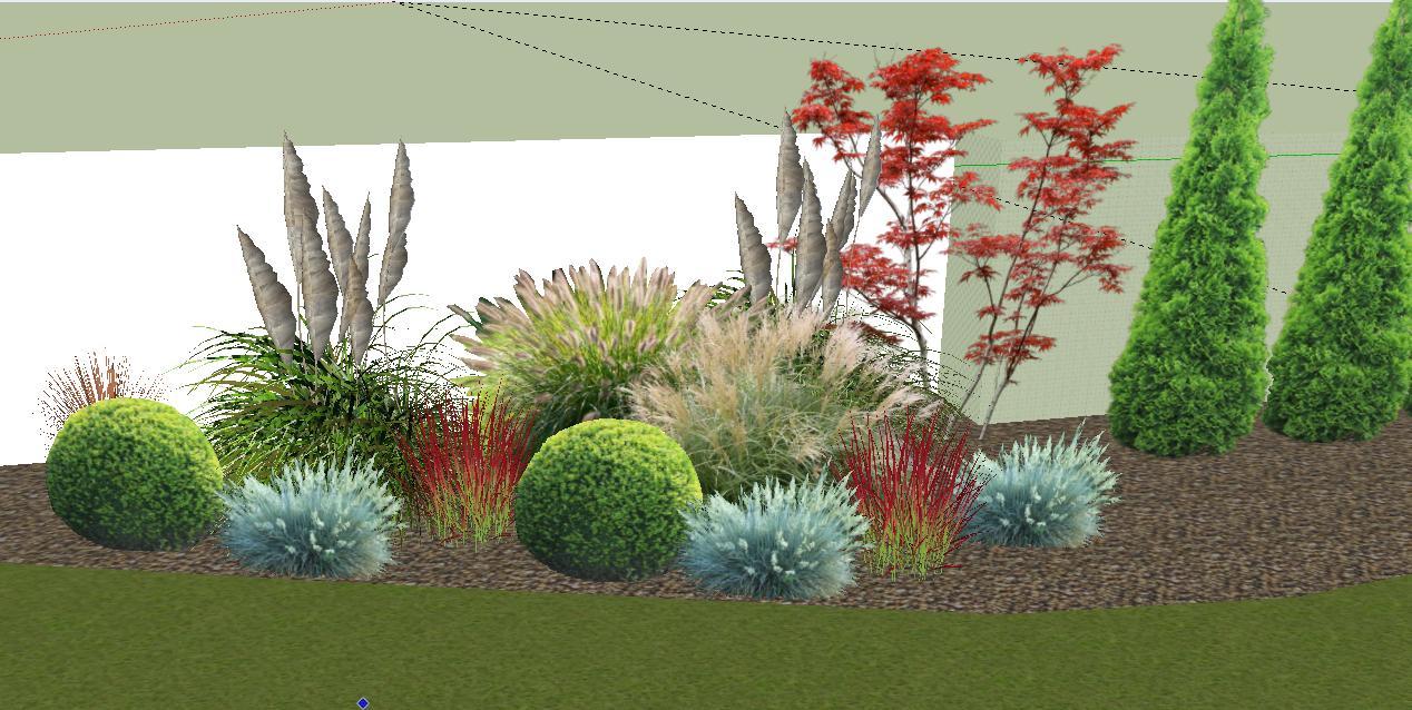 Záhrada plán a realizacia - javor, kortaderia pampova, ozdobnica cinska, perovec psiarkovity, imperata, ostrica carex, kruspan