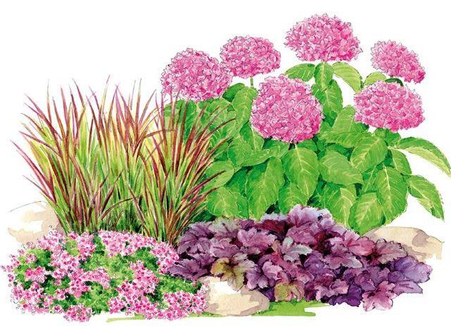 Inšpirácie do záhrady - nebol popis ale vyzera to na hortenziu, imperata red baron, heucheru a mozno materinu dusku :)