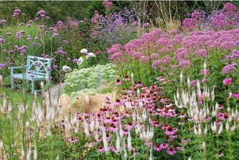 Echinacea, Veronicastrum Album, Eupatorium Maculatum, Sedum Brilliant, Geranium Rozanne, Hydrangea Annabelle,Verbena, Stipa