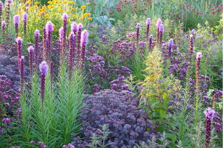 Inšpirácie do záhrady - Liatris, Sedum, Heliopsis, Ornamental Oregano