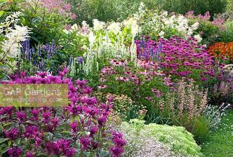 Echinacea purpurea, Phlox 'Le Mahdi' Persicaria polymorpha, Agastache 'Blackadder', Monarda 'Vintage Vine', Sedum 'eluwse Wakel', Helenium 'Sahin's Early Flowerer', Agastache 'Alabaster' and Hydrangea paniculata 'Limelight'