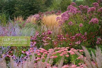 Sedum spectabile 'Autumn Joy', Echinacea purpurea 'Rubinstern', Eupatorium, Perovskia 'Blue Spire' and Calamagrostis 'Karl Foerster'