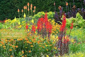 Canna 'Wyoming', Helenium 'Waltraut', Kniphofia uvaria 'Nobilis' and Lobelia cardinalis 'Bee's Flame'
