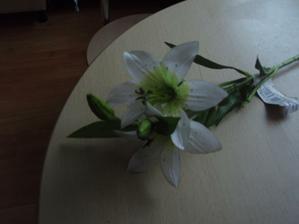 ...a bílá  lilie...