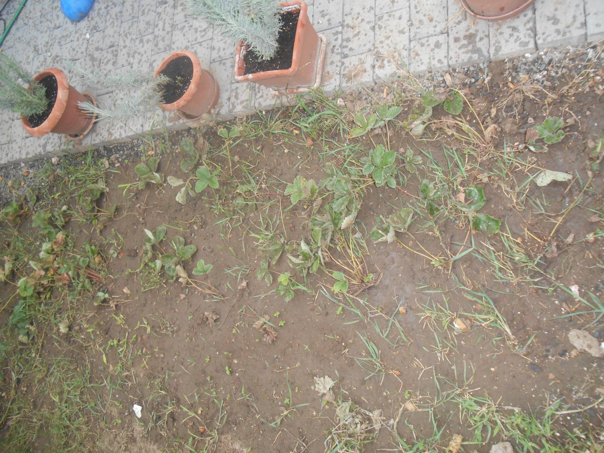 moje malá zahrádka a kytky v květináči - jelikož jsme zpravovali dvur do toho zateplovačka,tak zahrádka nic moc