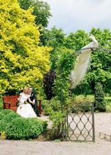 jako princezna s princem v zahradě - a opět ten páv ...