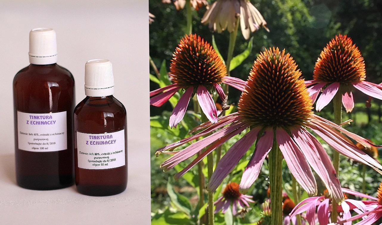 Echinacea - Obrázok č. 1