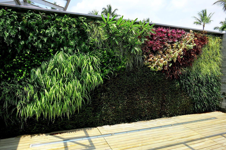 Vegetačné steny - Obrázok č. 4