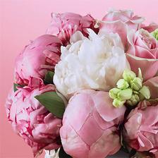 milujem pivonky, svadobná bude určite z nich :-) ale v smotankovej farbe