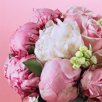 Predsvadobná horúčka :-) - milujem pivonky, svadobná bude určite z nich :-) ale v smotankovej farbe