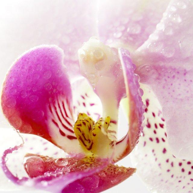NR-NO - milujem orchideu