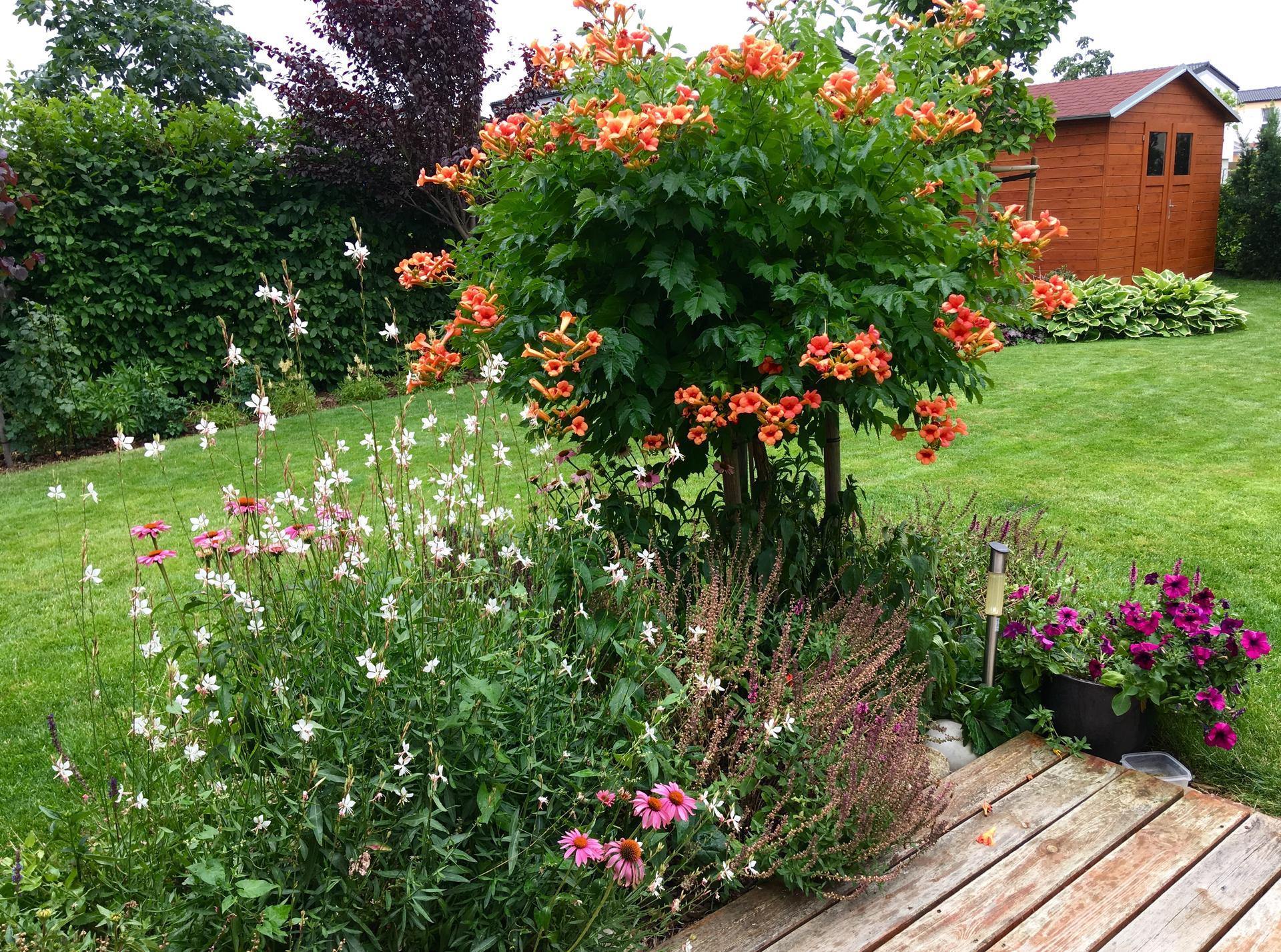 Zahrada 2020 - A to je ten zahradni domek- popinat se bude bok, je to pohledova zona z terasy...