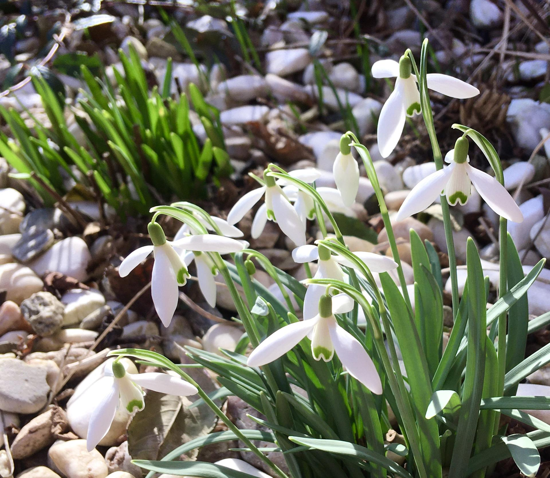 Zahrada 2020 - Uz se da na zahrade najit i dvojity jarni zaber 🤗