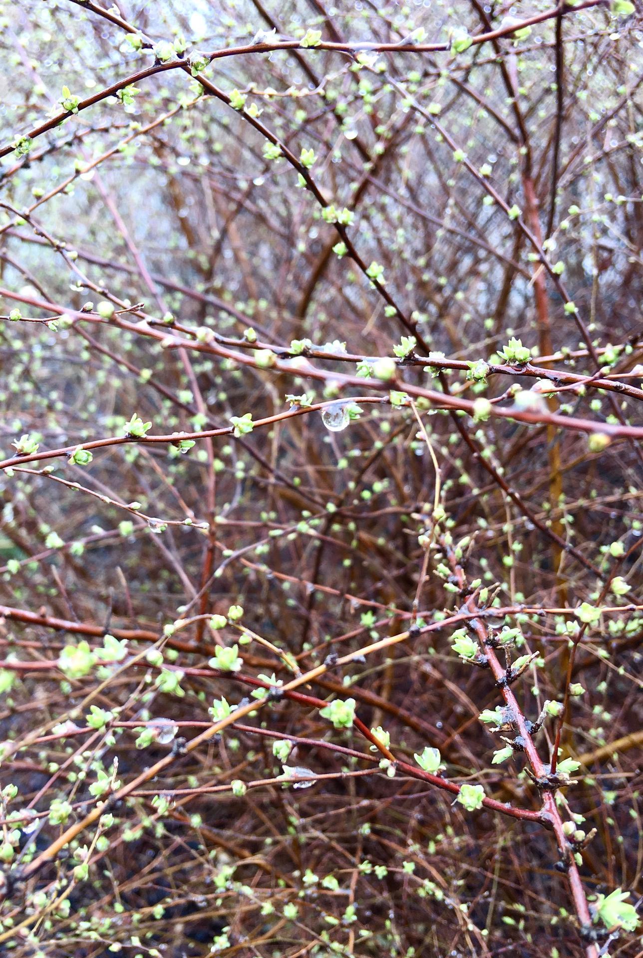 Zahrada 2020 - tavolniky uz  vylozene ladi jarni formu 😍
