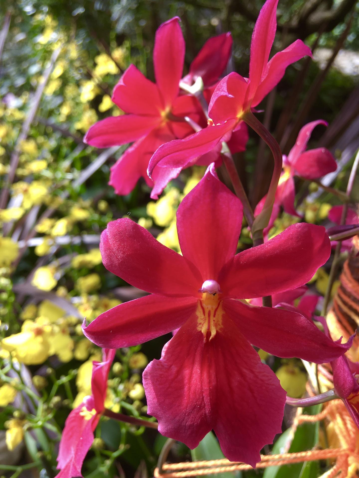 Vystava orchideji 2020 - Obrázek č. 3