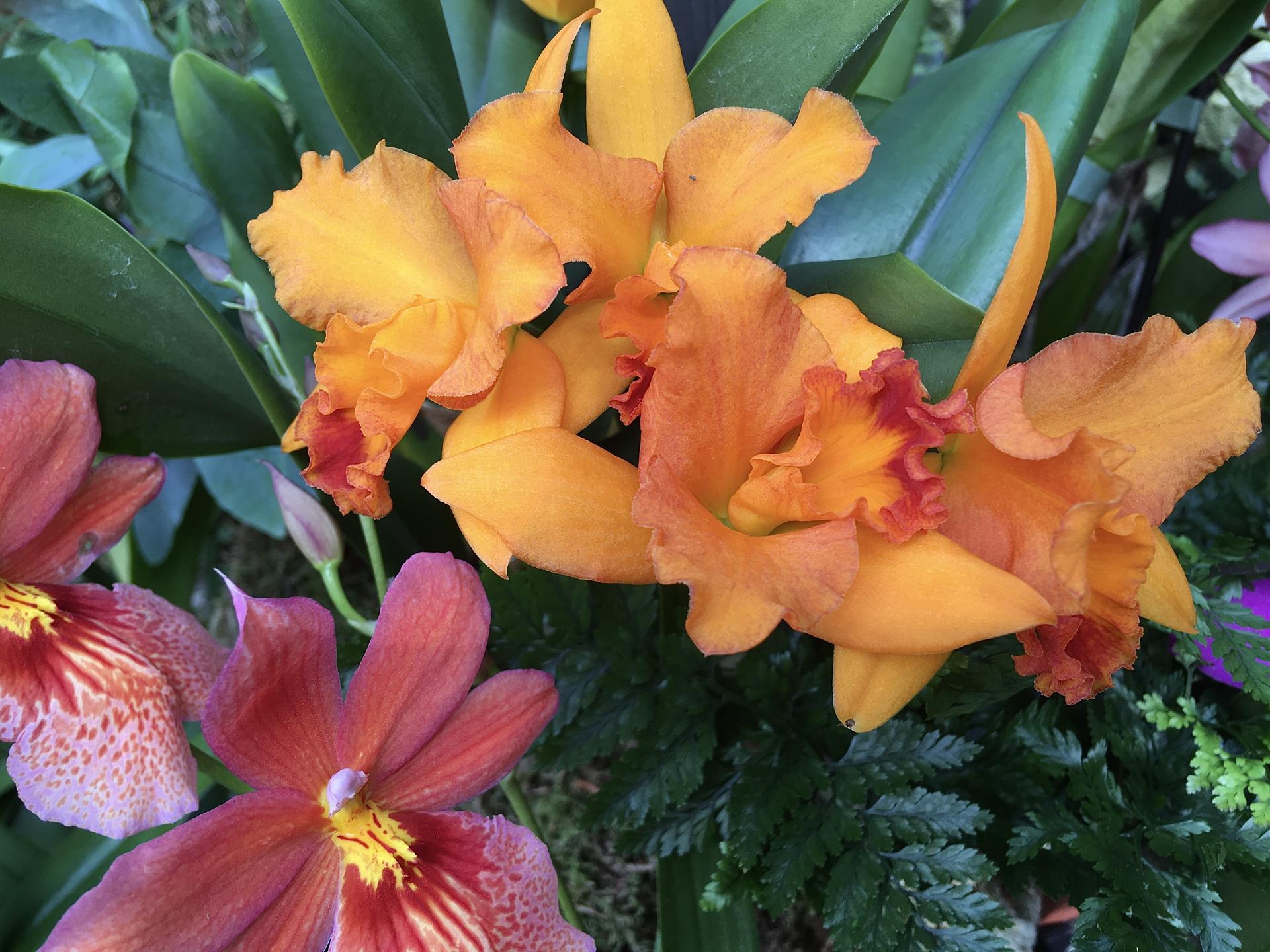 Vystava orchideji 2020 - Obrázek č. 2