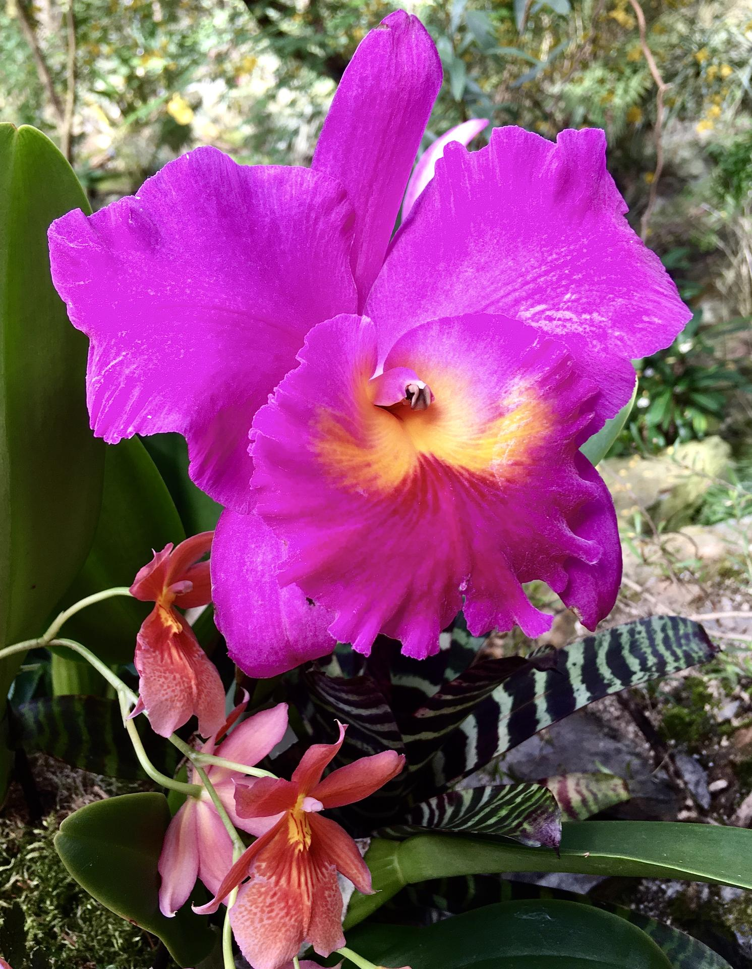 Vystava orchideji 2020 - Obrázek č. 1