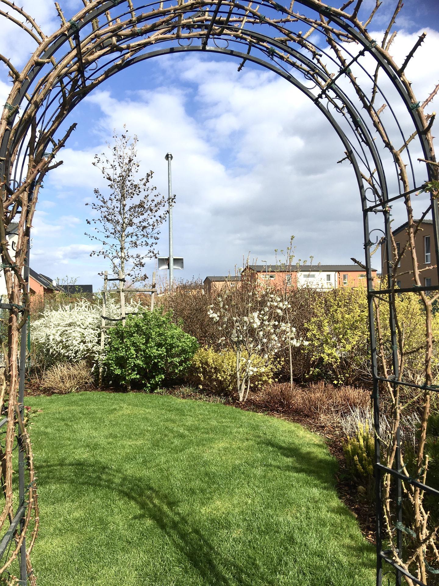 Zahrada 2020 - ruzova brana letos ostrihana skoro do hola... snad obrazi!  🤔