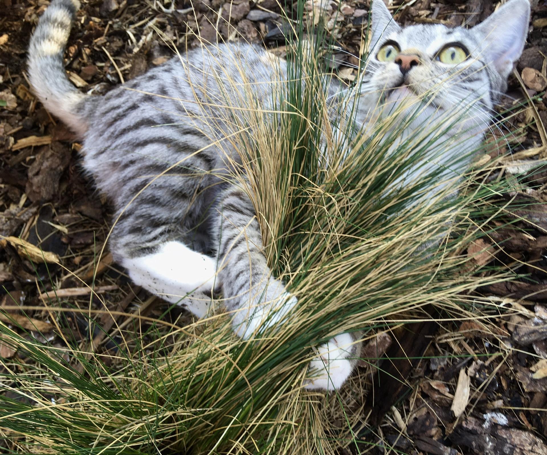 Zahrada 2020 - Ruzenka mi pomaha strihat dekorativni smaragdovou travu 😫