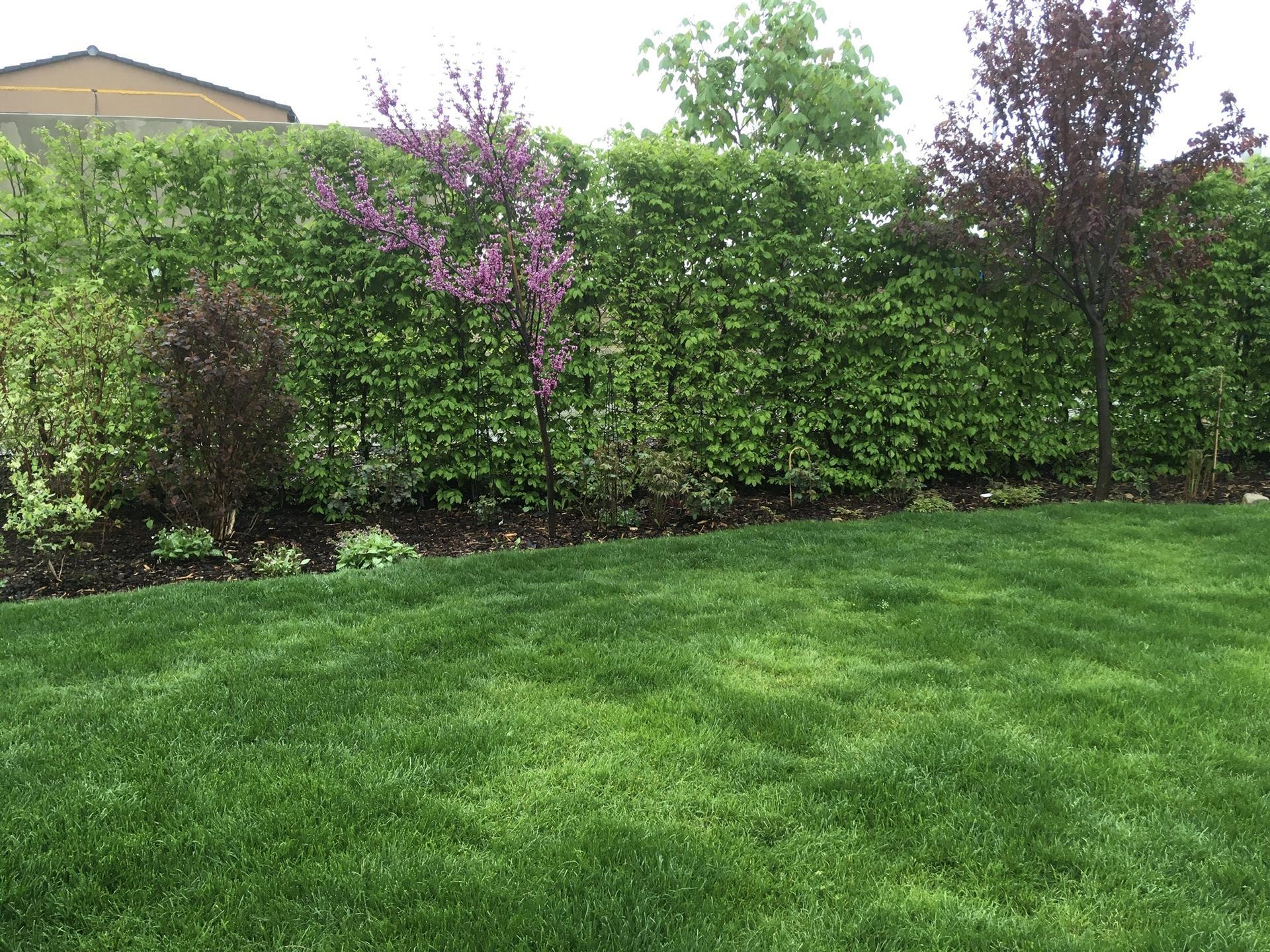 Zahrada 2020 - Travnicek uz se pekne zelena ❤️