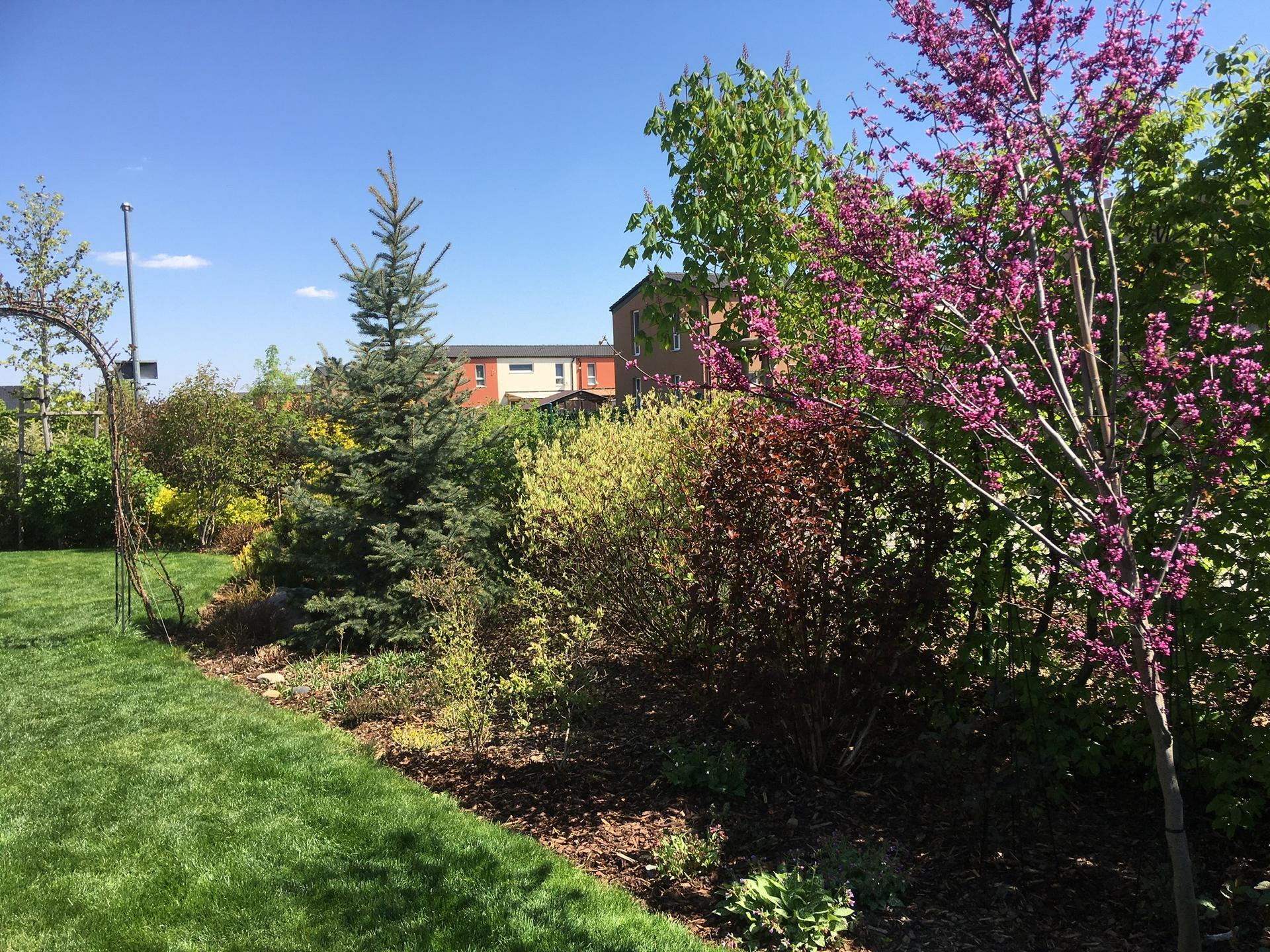 Zahrada 2020 - Obrázek č. 90