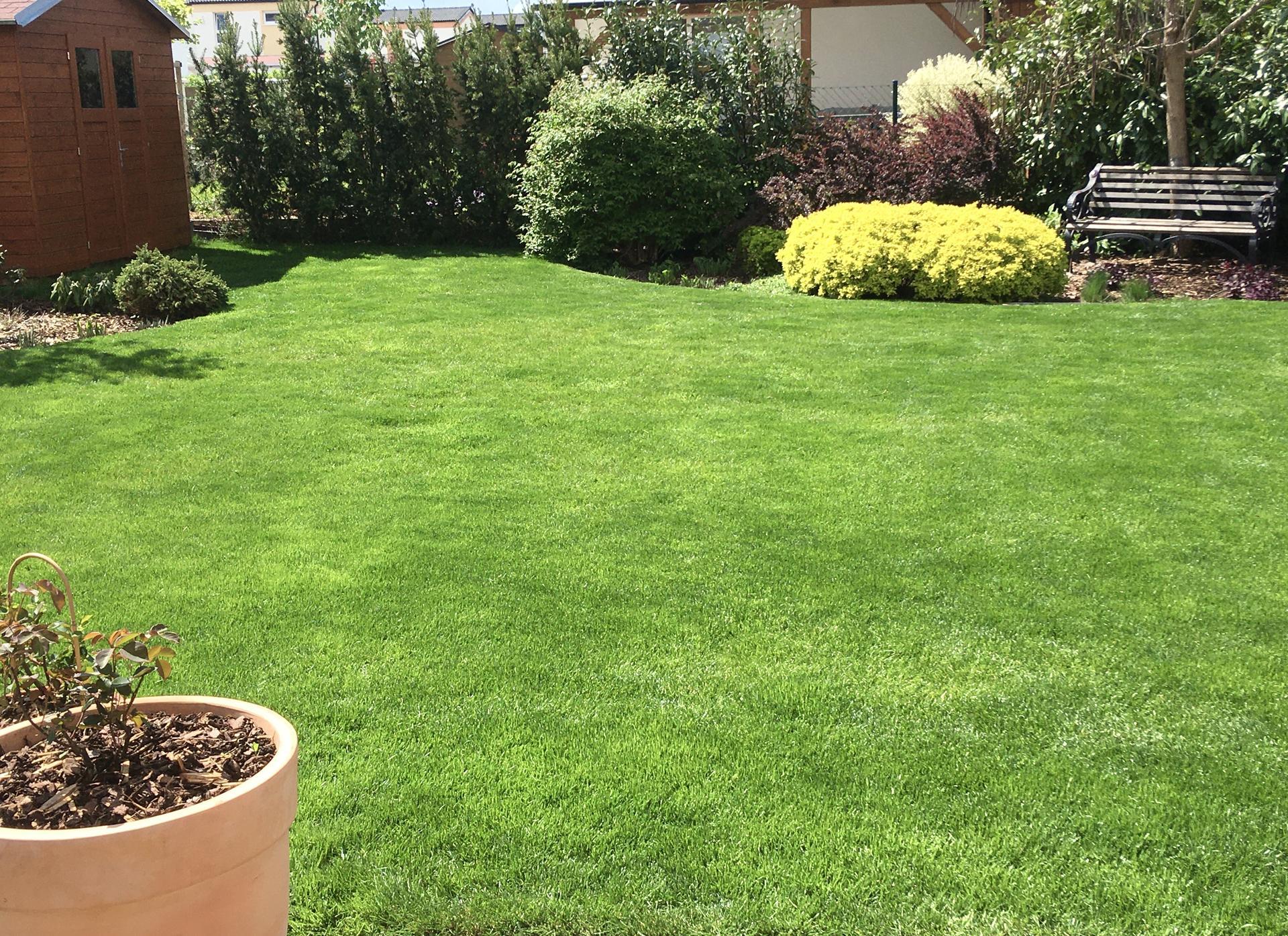 Zahrada 2020 - travnicek ma po desti super barvu, kez by mu vydrzela ❤️!