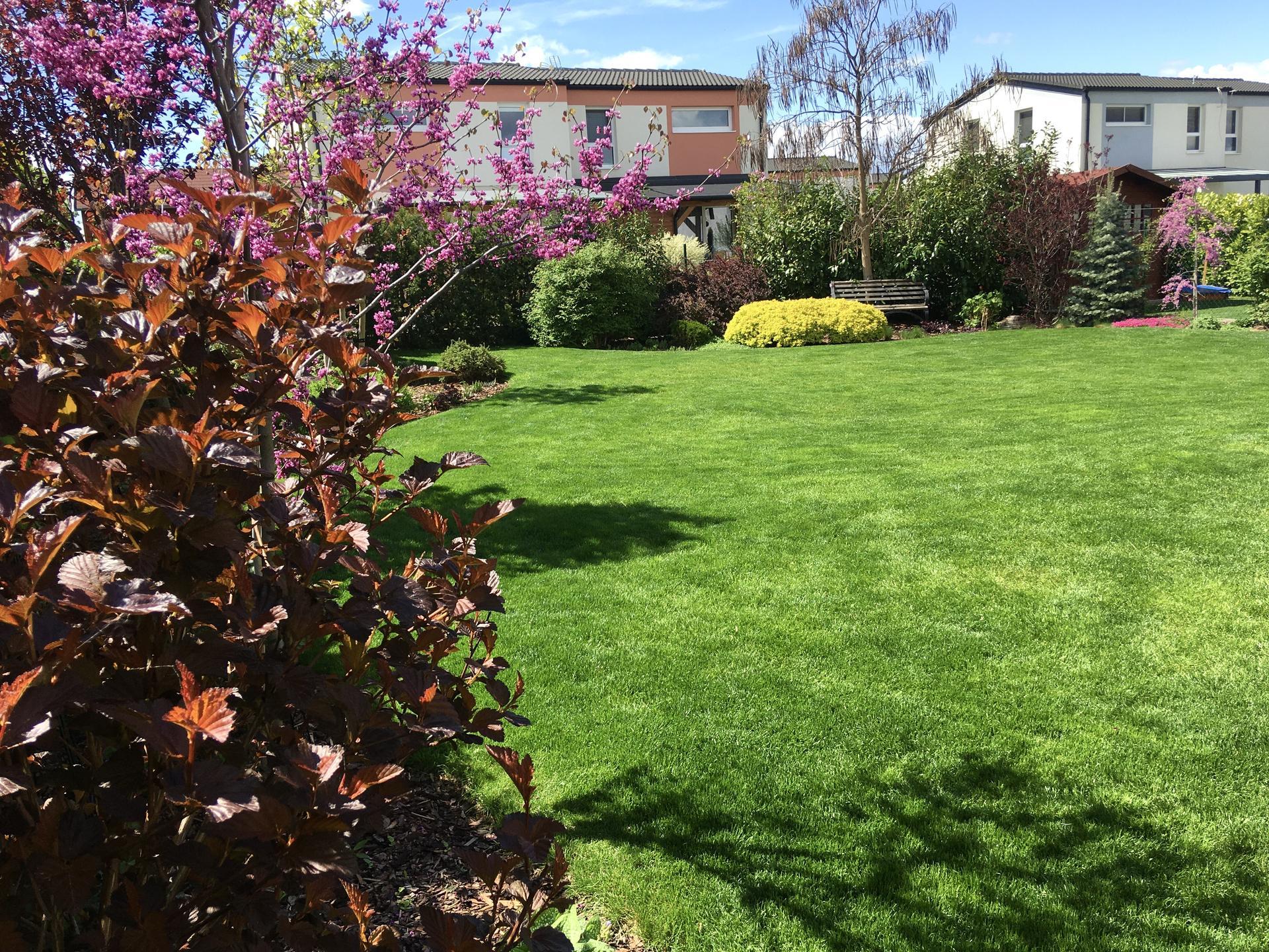 Zahrada 2020 - zelena je dobra 😃