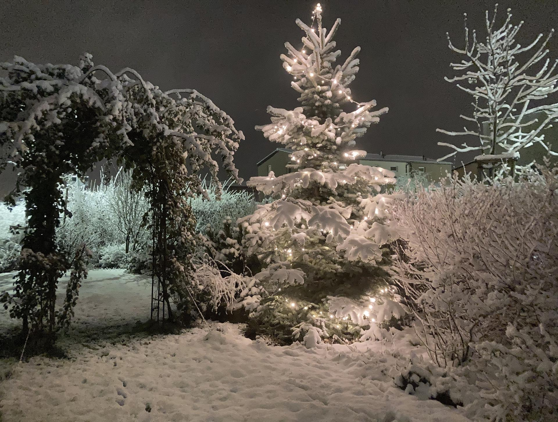 Zahrada 2021 - Obrázek č. 1