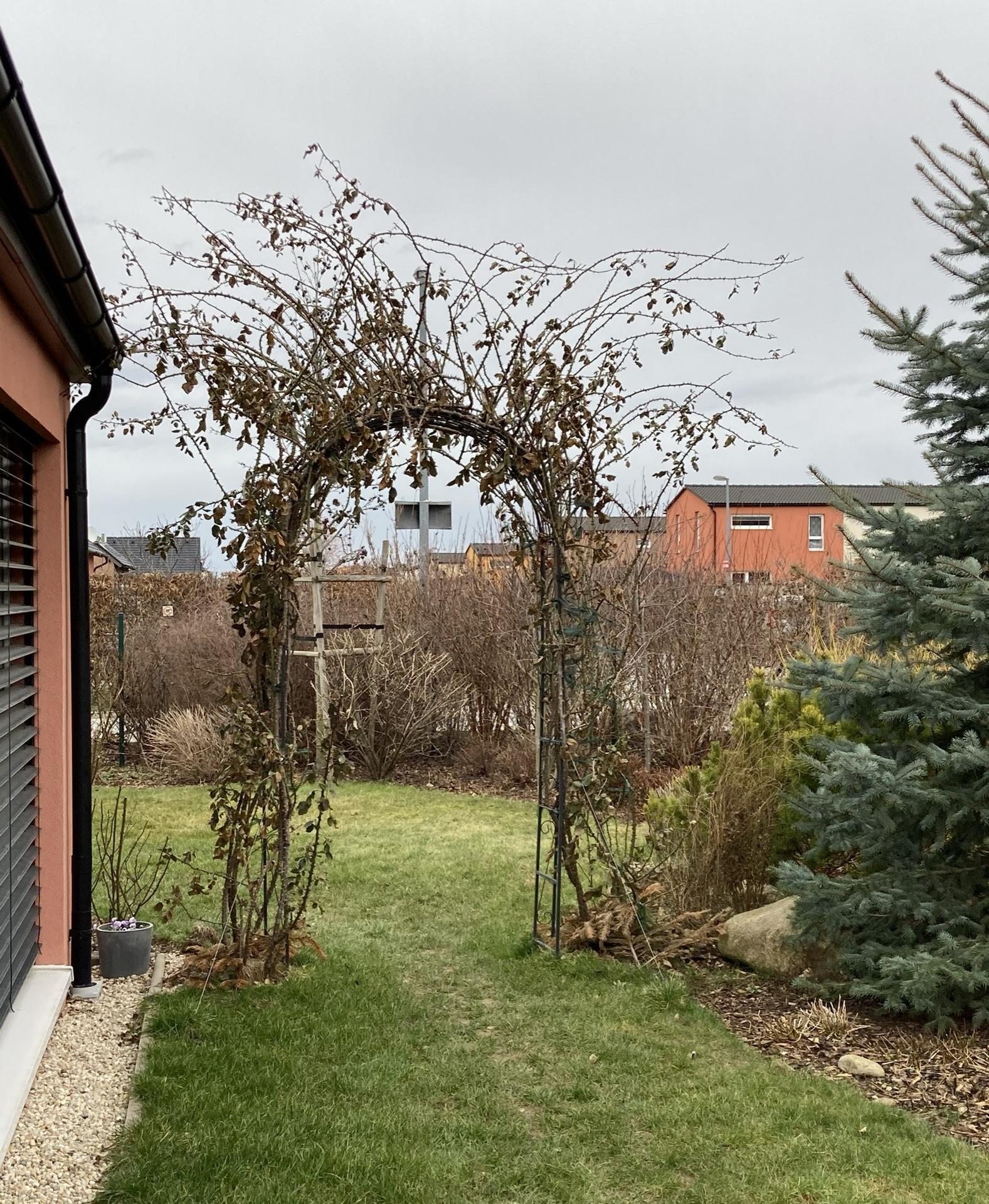 Zahrada 2021 - Obrázek č. 18