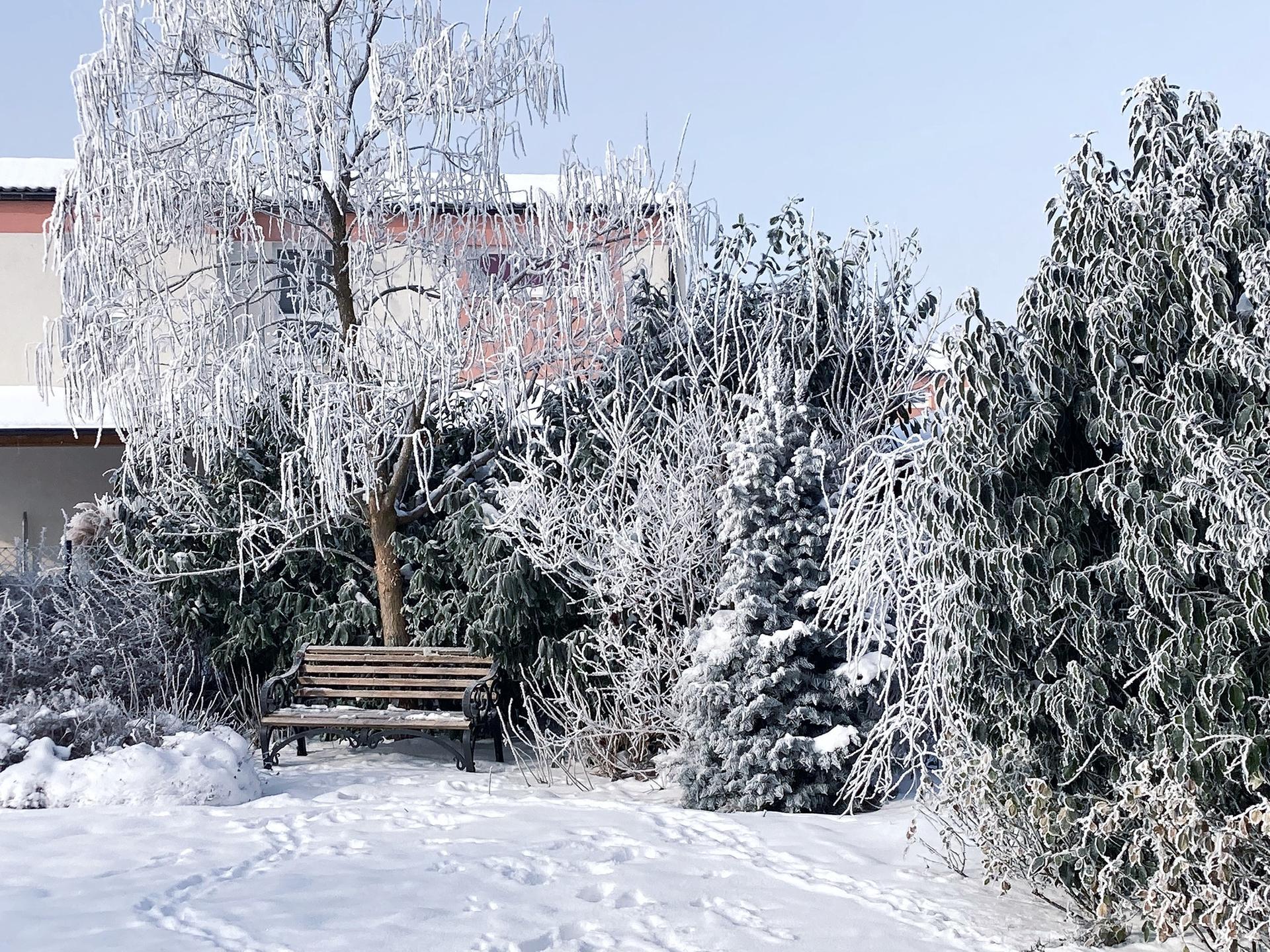 Zahrada 2021 - Obrázek č. 9