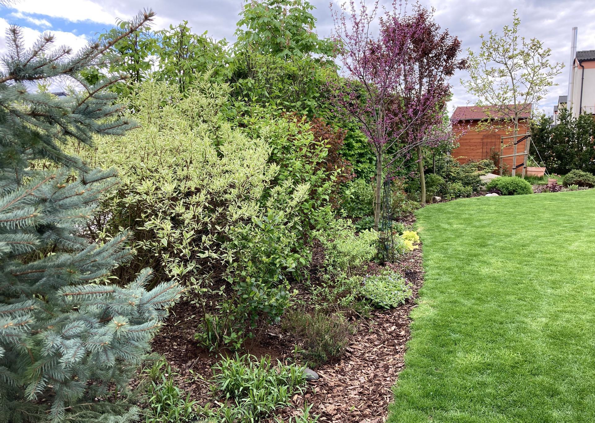 Zahrada 2021 - Obrázek č. 38
