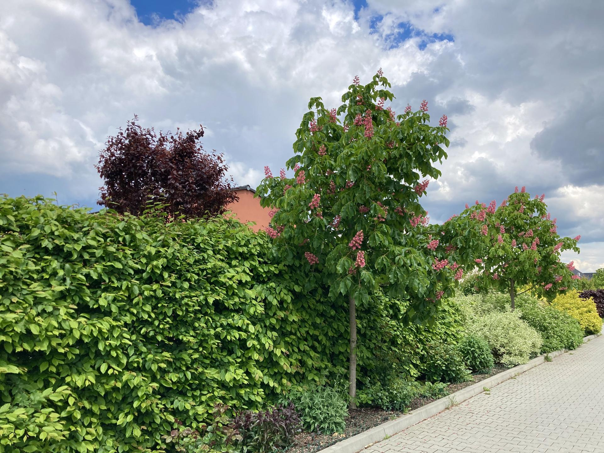 Zahrada 2021 - Zahrada zvenku... Kastanova ulice... na satelit to neni nejhorsi- uz k nam neni skoro videt😃!