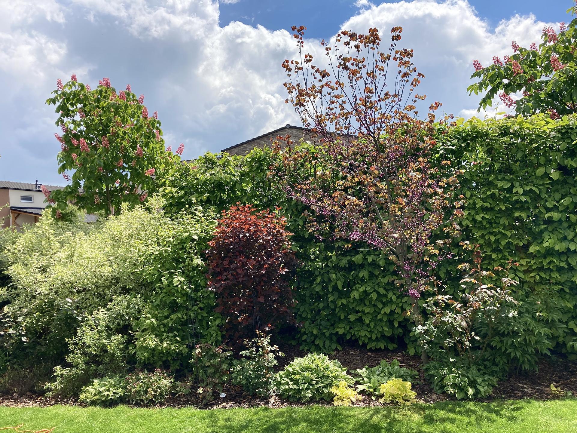 Zahrada 2021 - Kombinovane vysadby jsou na zahrade stejne nejhezci🤩