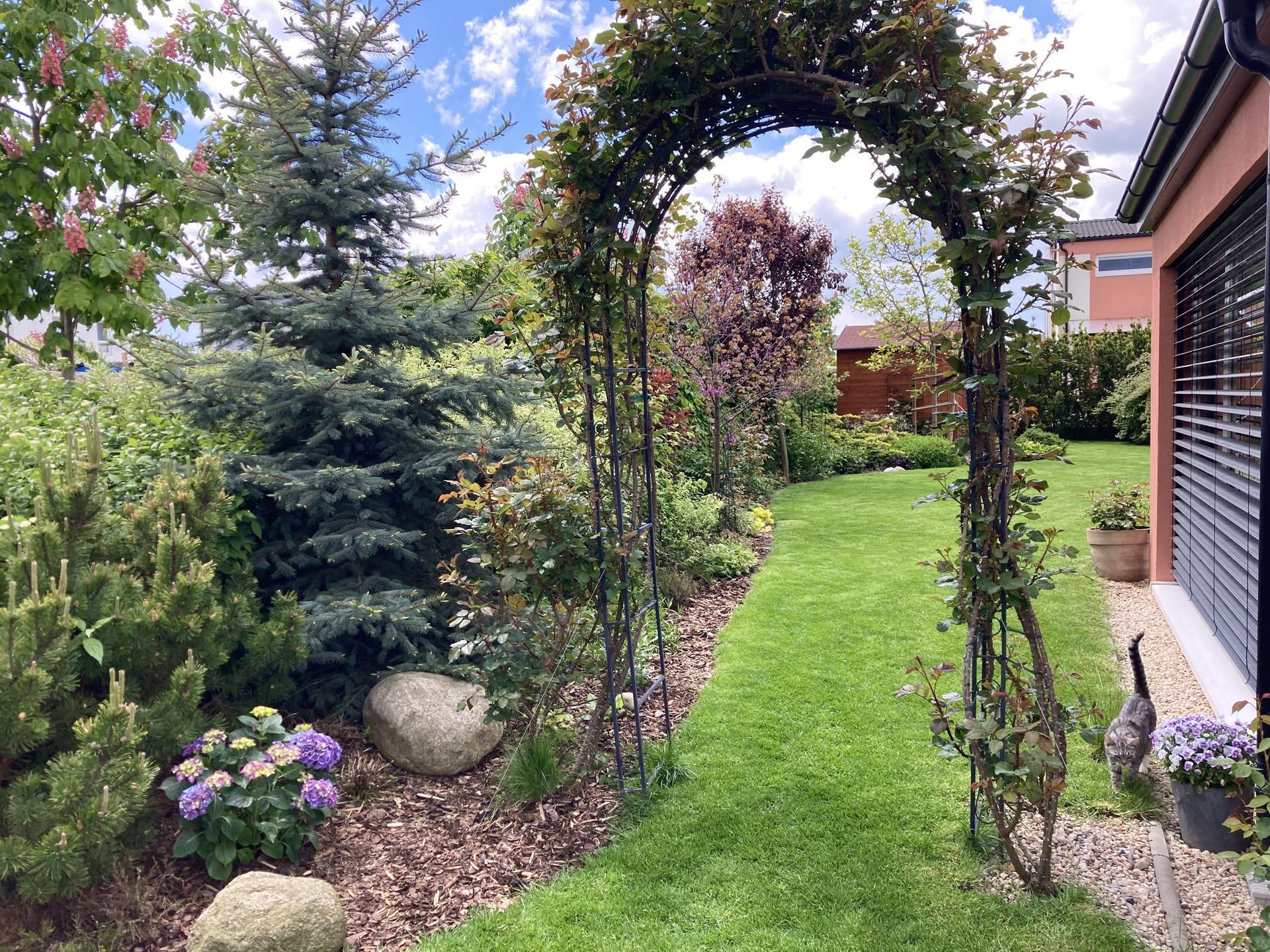 Zahrada 2021 - Ruzenka jde na vychazku...