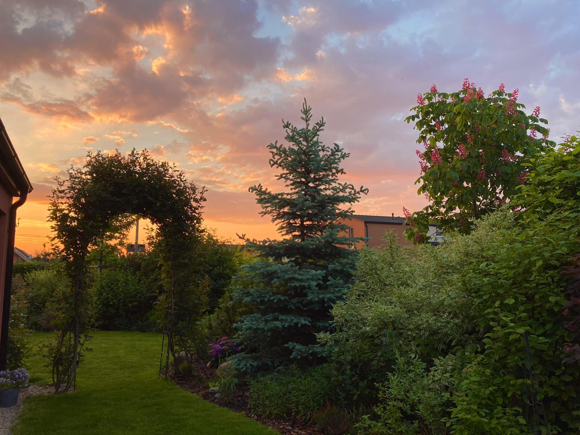 Zahrada 2021 - svitani... pet rano.... poustim kocky domu z toulacky🥰