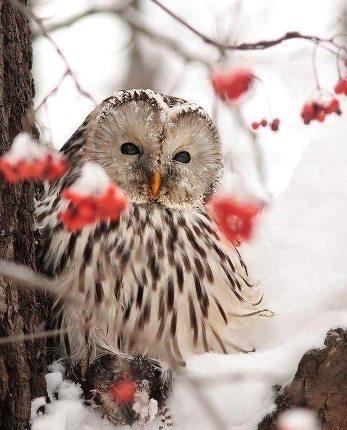 Aj zima má svoje čaro  - inšpirácie :) - Obrázok č. 39