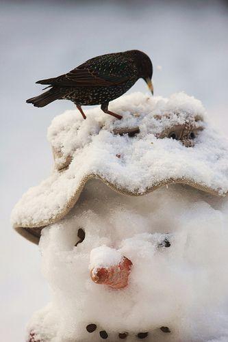 Aj zima má svoje čaro  - inšpirácie :) - Obrázok č. 40