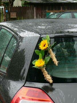 Autocorso něvěsty i ženicha - zadní kapota a slunečnice