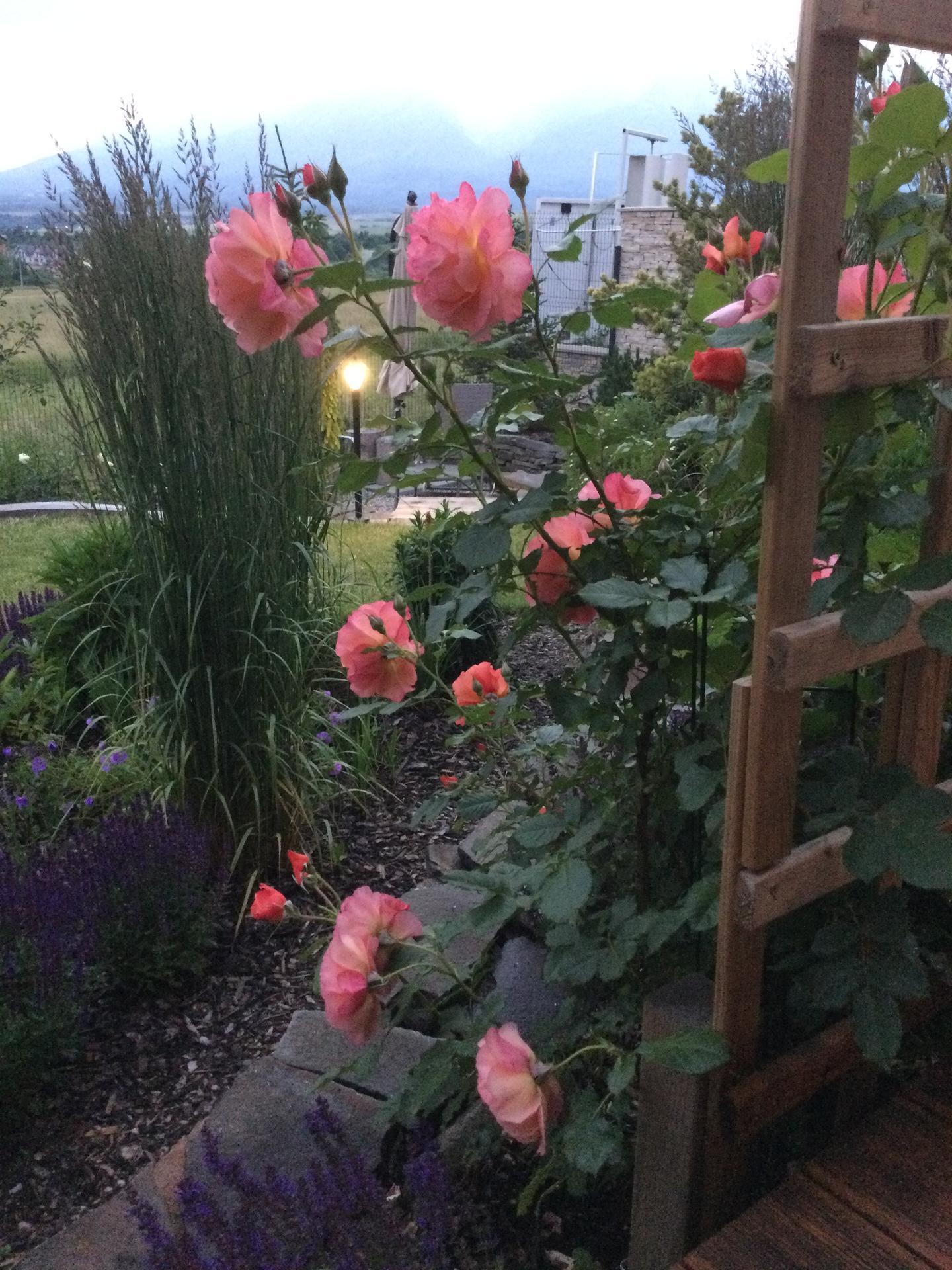 Záhrada po 2 rokoch ... - Obrázok č. 2