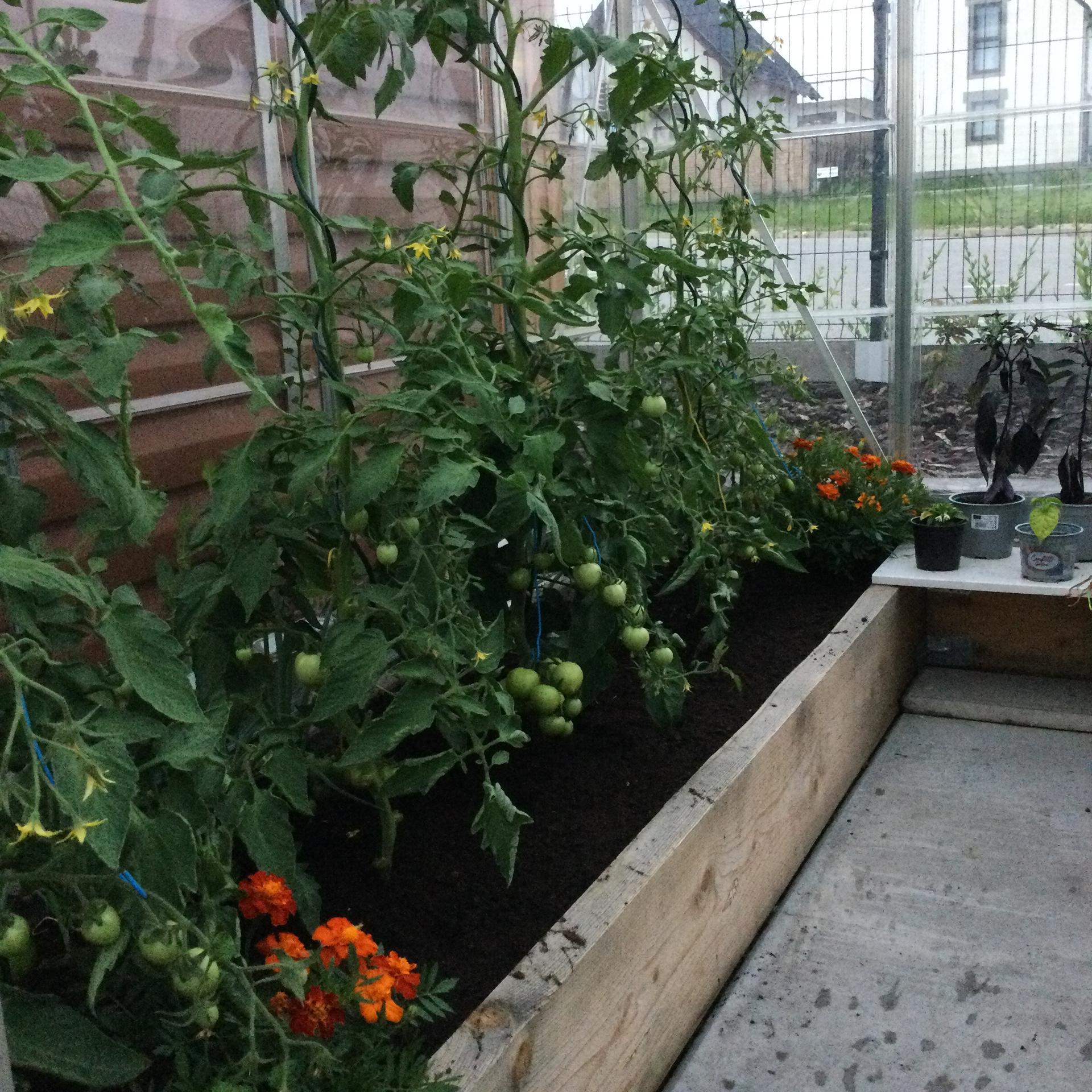 Záhrada po 2 rokoch ... - Obrázok č. 22