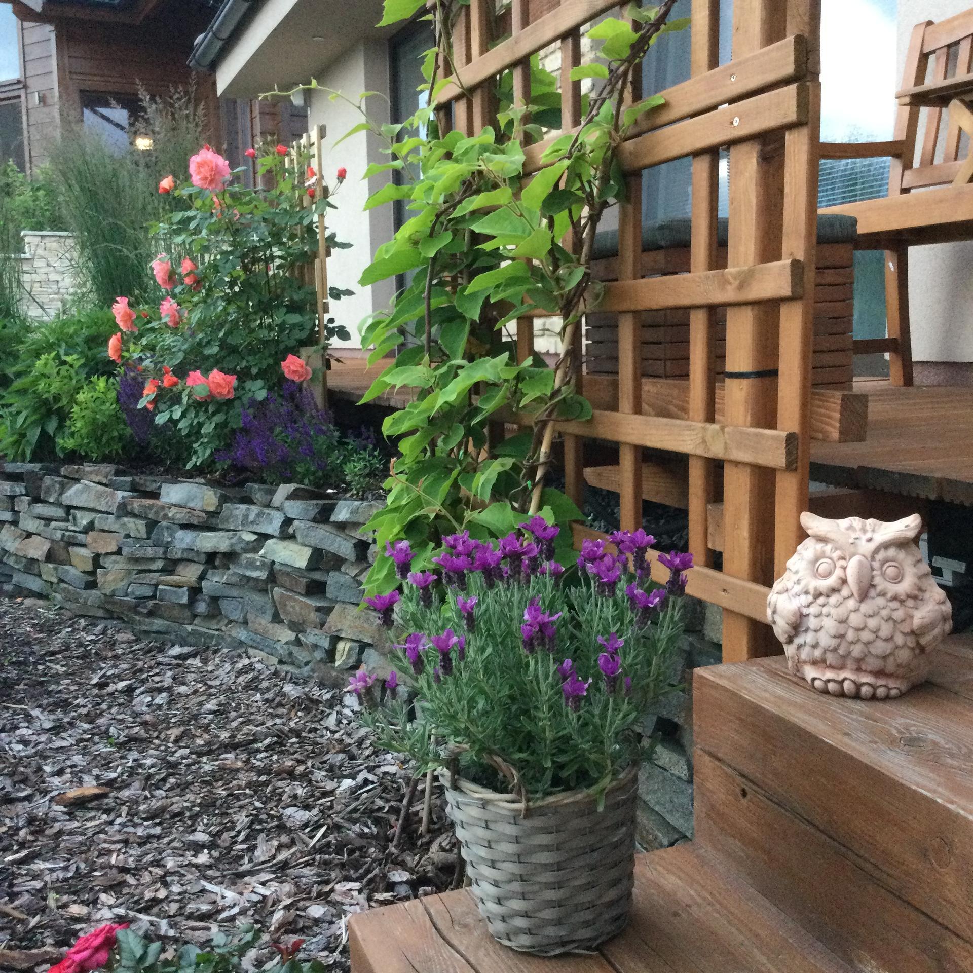 Záhrada po 2 rokoch ... - Obrázok č. 30