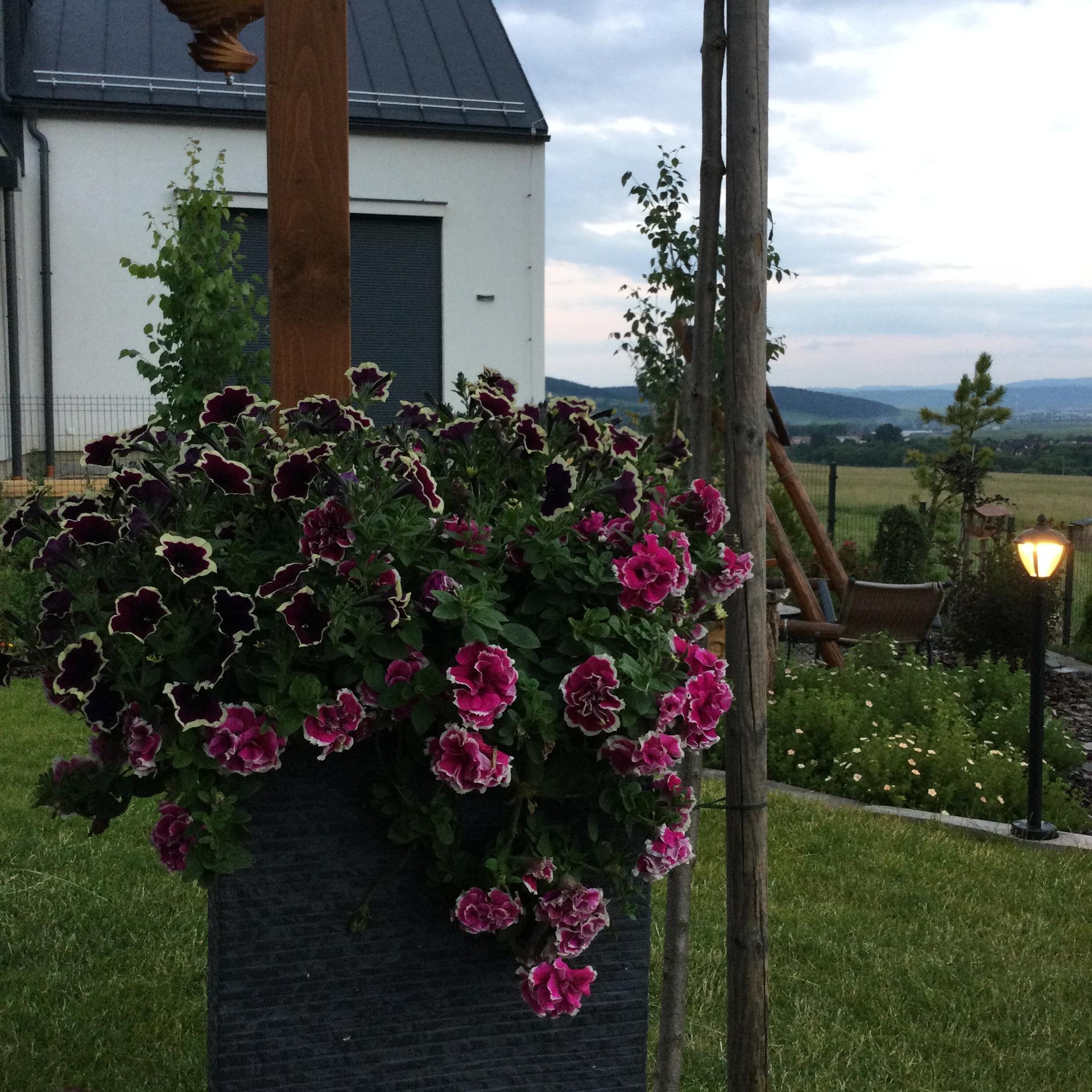 Záhrada po 2 rokoch ... - Obrázok č. 24