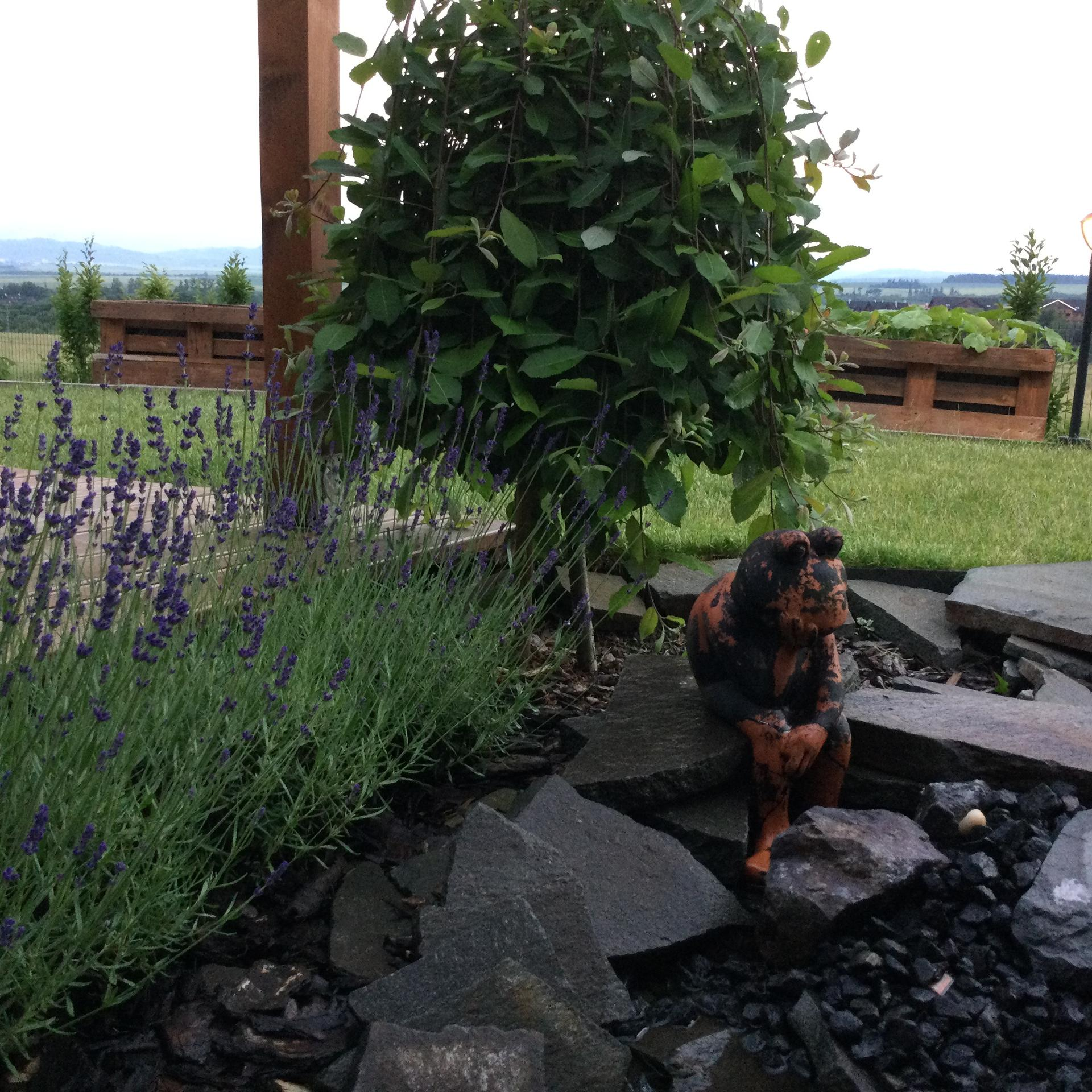 Záhrada po 2 rokoch ... - Obrázok č. 31